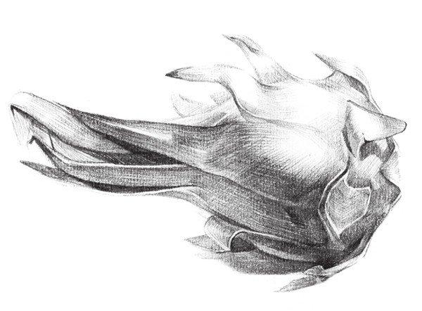 素描静物火龙果的绘画步骤教程(4)