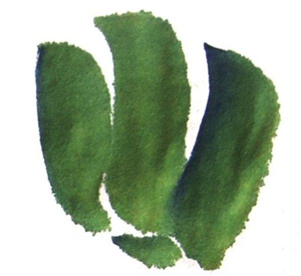 国画青椒的绘画步骤三