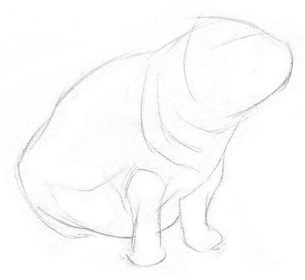 1、打形,大致表现出小河马的头部、脖子、身体和两条前腿,在脸部轻轻画一条横线,表示出眼睛的大致位置。  素描河马的绘画步骤一 2、细致描绘出身体轮廓,颈部有好几层结构,都要画出来。  素描河马的绘画步骤二