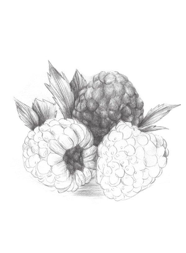 静物水果树莓的绘画步骤教程(2)_素描教程_学画画_我