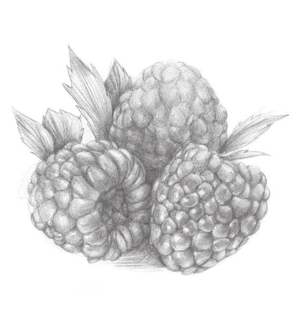 静物水果树莓的绘画步骤教程(3)_素描教程_学画画_我