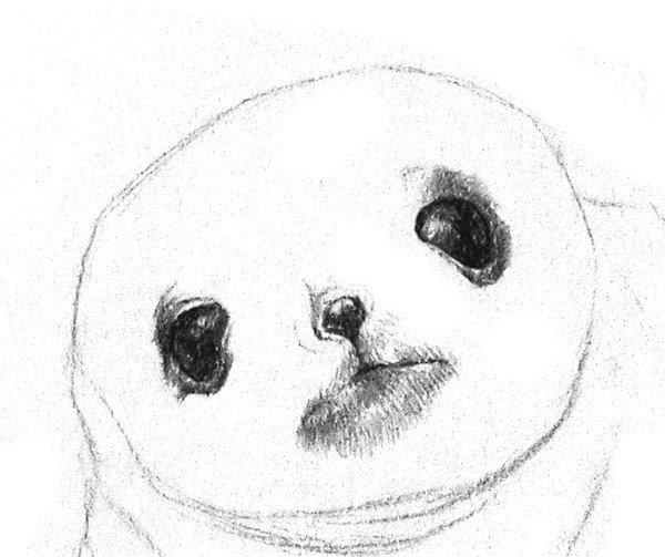素描动物 > 素描动物:素描小海豹的绘画步骤教程(2)      3,描深眼珠