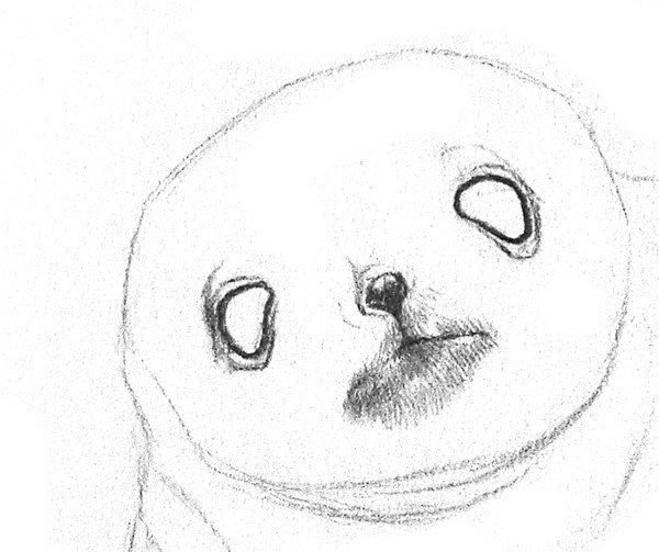 3、描深眼珠和眼眶交界的地方,涂黑小鼻子,鼻尖上留出一道亮光。描深嘴唇闭合线,在嘴巴周围轻轻地画一层毛发。  素描小海豹的绘画步骤教程三 4、刻画眼珠。在眼珠上留出一点高光,不要完全涂黑,周围留出一点稍亮点地方,让眼珠看起来润滑、闪亮。  素描小海豹的绘画步骤教程四 5、在下巴和两只鳍上画上阴影,下巴处加深一点,将头部和身子的空间位置区分出来。  素描小海豹的绘画步骤教程五