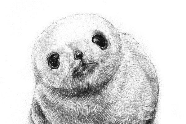 笔素描画,各种动物彩色钢笔画图片欣赏 6