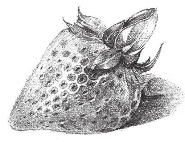 素描水果草莓的绘画教程(2)
