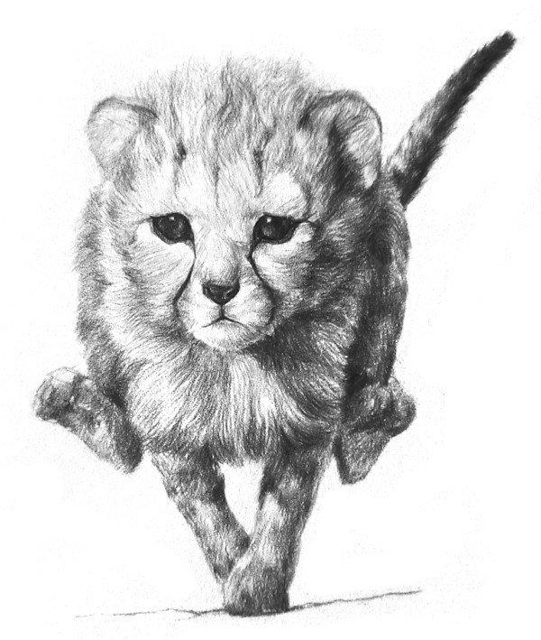 素描小猎豹入门绘画教程