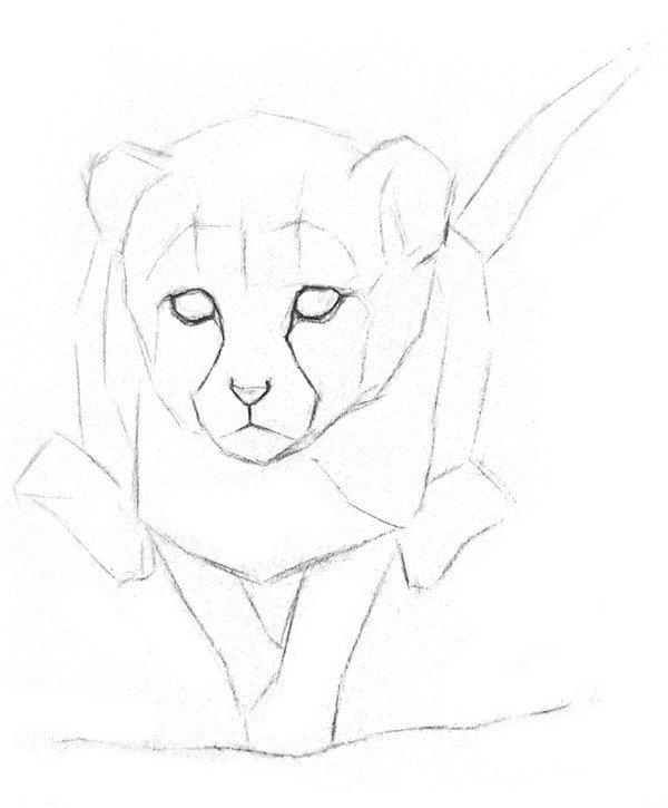 学画画 素描教程 素描动物 > 素描小猎豹入门绘画教程      素描小