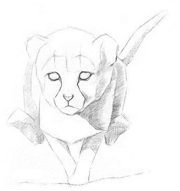 素描小豹子的绘画步骤教程三
