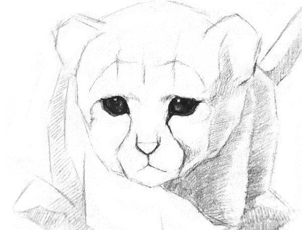 3、小豹子身上的光影比较强烈,所以先在较深的地方排上一层阴影,表示出大致的明暗关系,线条的排列要尽量整齐,这样后面深入刻画时才不会显得乱。  素描小豹子的绘画步骤教程三 4、从眼睛开始刻画。高光处留白,眼珠与眼眶的交界处和瞳孔最深,其他地方稍微亮一点。  素描小豹子的绘画步骤教程四 5、鼻孔旁边留出一条亮光,从鼻尖往外呈放射状地画毛发,脸下面及胸前的毛发画深一点,这样就能感觉到小豹子的头伸向前面。  素描小豹子的绘画步骤教程五