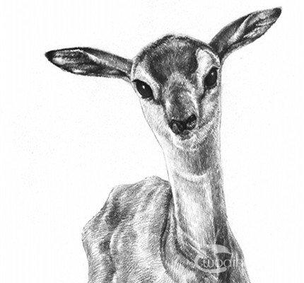 素描小鹿的绘画技法