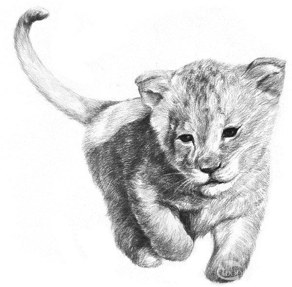 学画画 素描教程 素描动物 > 素描小狮子的绘画技法      狮子是世界