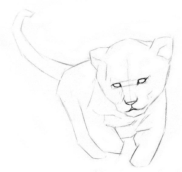 素描小狮子的绘画步骤二
