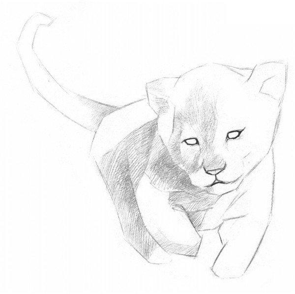 素描小狮子的绘画步骤三