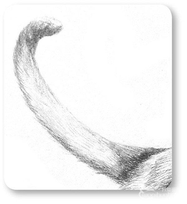 素描小狮子的绘画步骤七-1