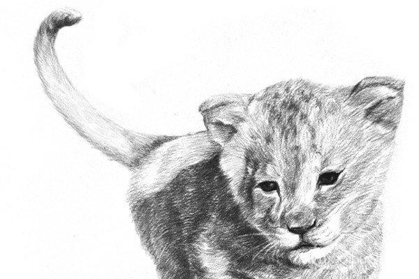 学画画 素描教程 素描动物 > 素描:狮子的绘画步骤(5)