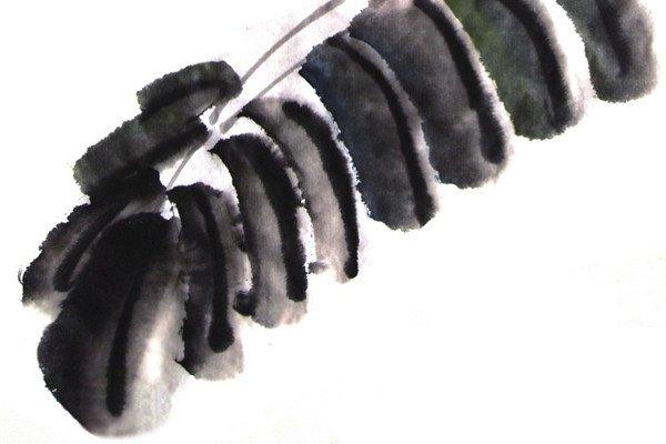 国画芭蕉叶的绘画步骤教程图片