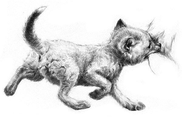 素描小狐狸绘画步骤    1,大致描绘出小狐狸的脑袋,身体,四肢的轮