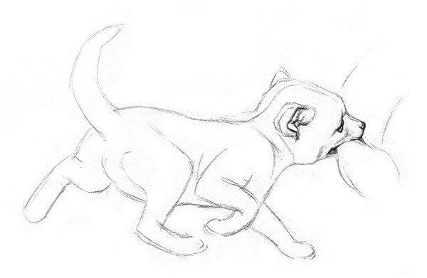 素描小狐狸绘画步骤二