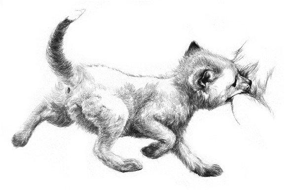 素描小狐狸绘画步骤八