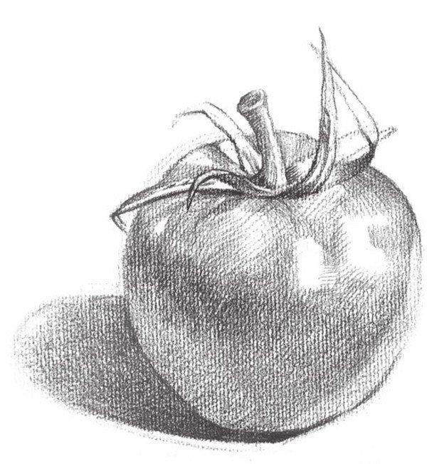 素描西红柿图片