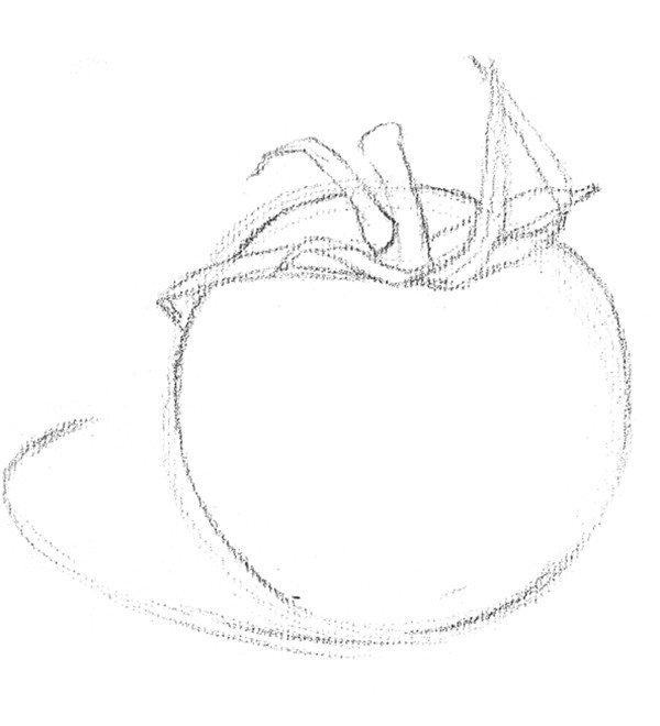 素描西红柿的绘画技法步骤二-素描西红柿的绘画技法 2