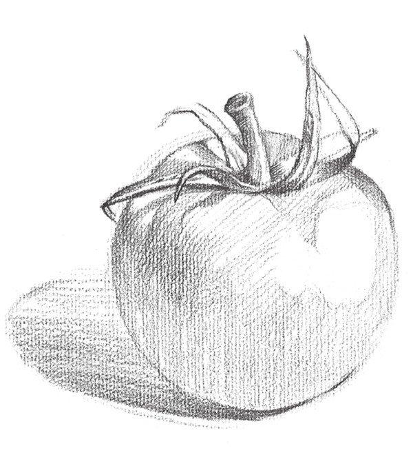 素描西红柿的绘画技法 3