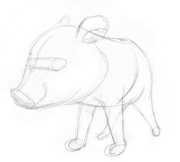 素描教程 素描动物