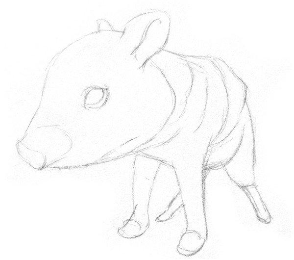素描小野猪的绘画技法