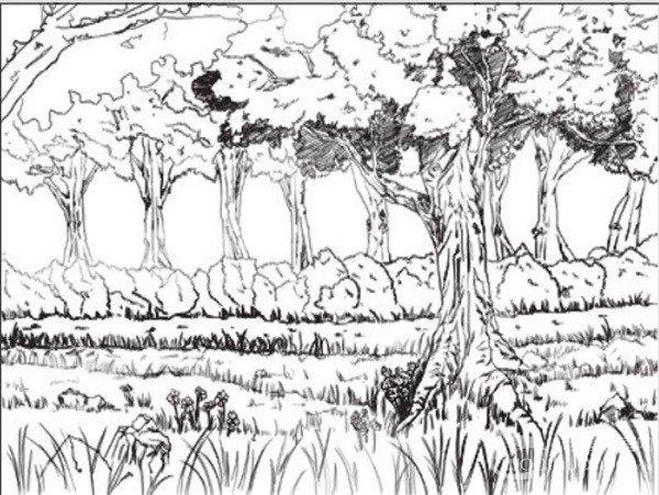 速写场景 > 速写树林的绘画技法                      要想把树木画