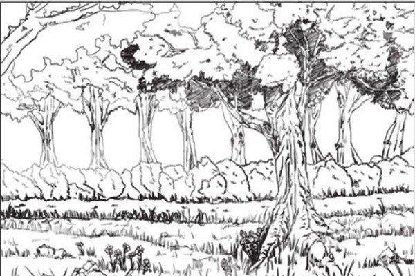 速写树林的绘画技法