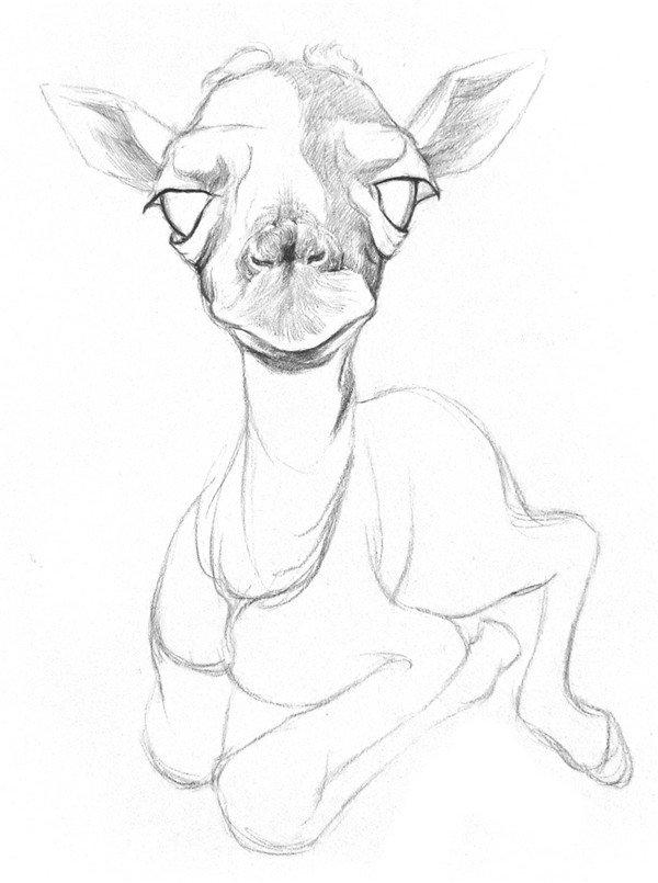 素描动物 > 素描长颈鹿的绘画技法(2)      3,在脸部粗略地上一层阴影
