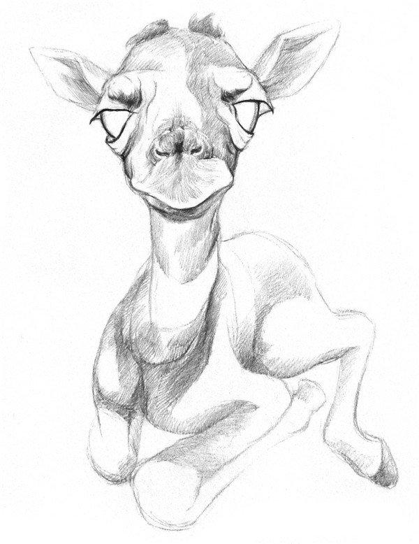 学画画 素描教程 素描动物 > 素描长颈鹿的绘画技法(2)      3,在脸部