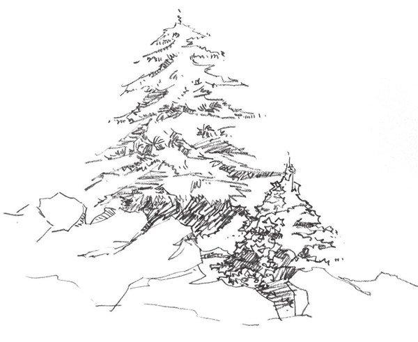 单个树木的速写步骤二单个树木的画法步骤二-1-速写单个树木的四中技图片