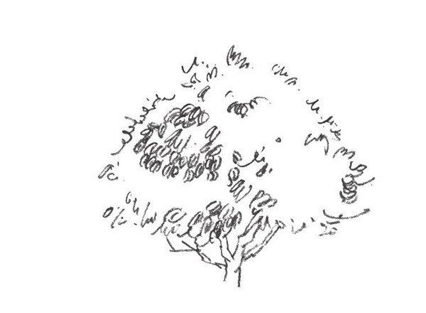 素描大树的画法-速写单个树木的四中技法 4图片