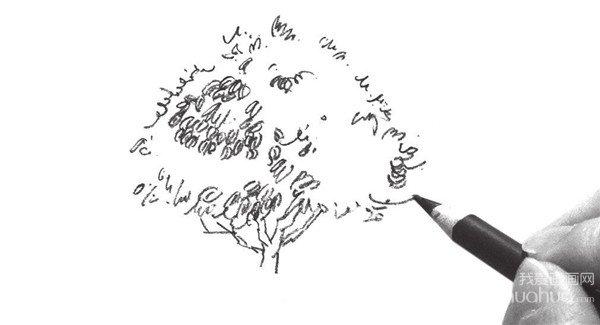 速写单个树木的四中技法(4)