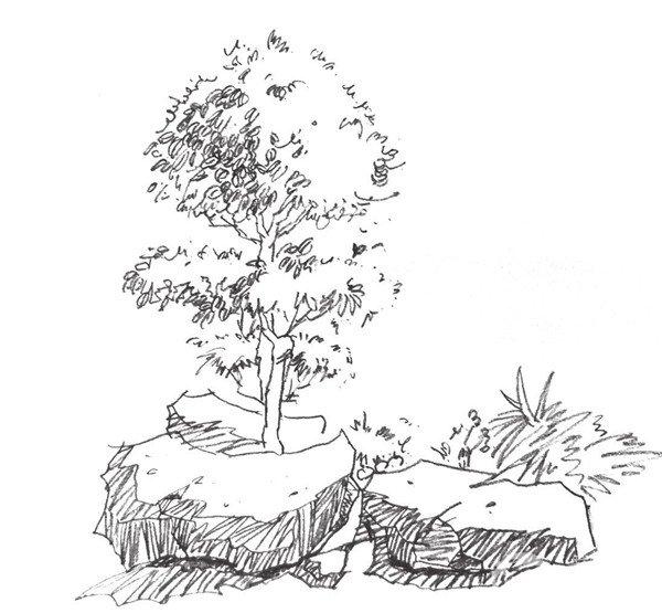 速写单个树木的四中技法 5
