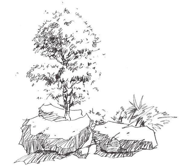4、画出适合的造型,并将阴影画出来,画的时候要注意线条的排列。  单个树木的速写步骤四 5、为画面添加石头和草的绘制,注意画面的布局和层次感的表现。  单个树木的速写步骤五 6、强调画面,并调节完善画面,注意整体感的把握,不要忽略细节的刻画。  单个树木的速写步骤六