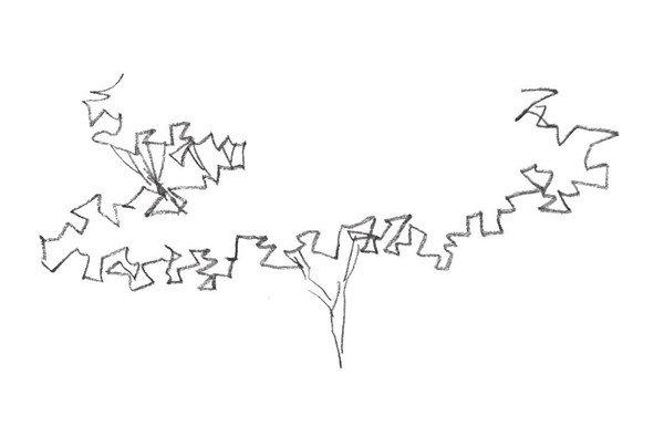 单个树木的速写步骤一