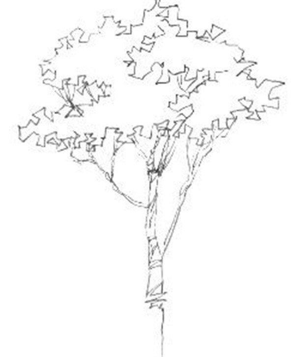 1、用虚线将树的大致轮廓画出来,注意线条的曲直转折,注意浓淡变化。  单个树木的速写步骤一  单个树木的速写步骤一-1  单个树木的速写步骤一-2 2、调节画面的整体效果,完善树的绘制。  单个树木的速写步骤二 初学者应从枯树或冬天的落叶树作为练习的对象,没有叶子的树枝结构清楚,姿态鲜明,便于画者了解各种树的生长规律与基本结构。