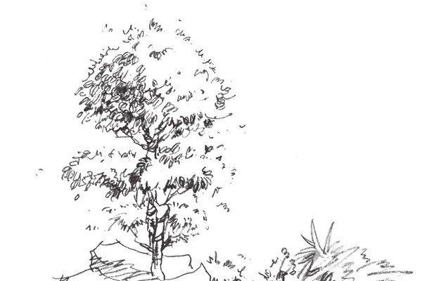 水墨画柳树图片13P 各种国画杨柳的国画水墨画法 6
