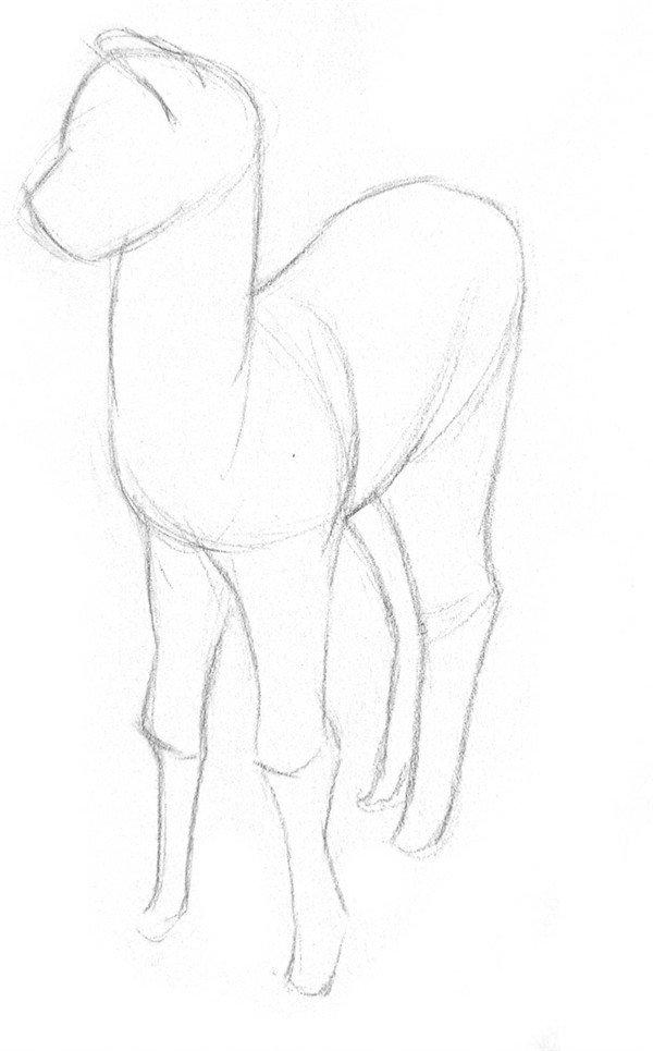 素描羊驼的绘画步骤一