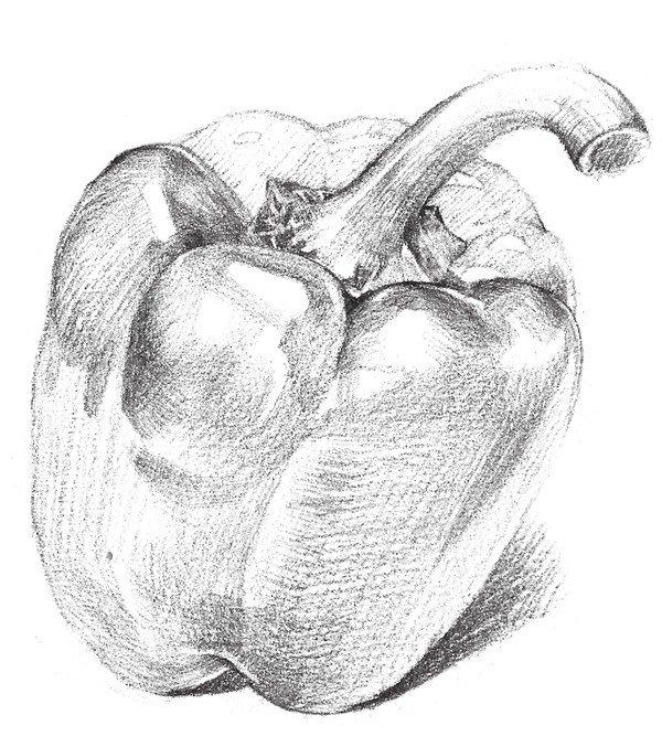 素描柿子椒的绘画步骤_素描教程_学画画_我爱画画网
