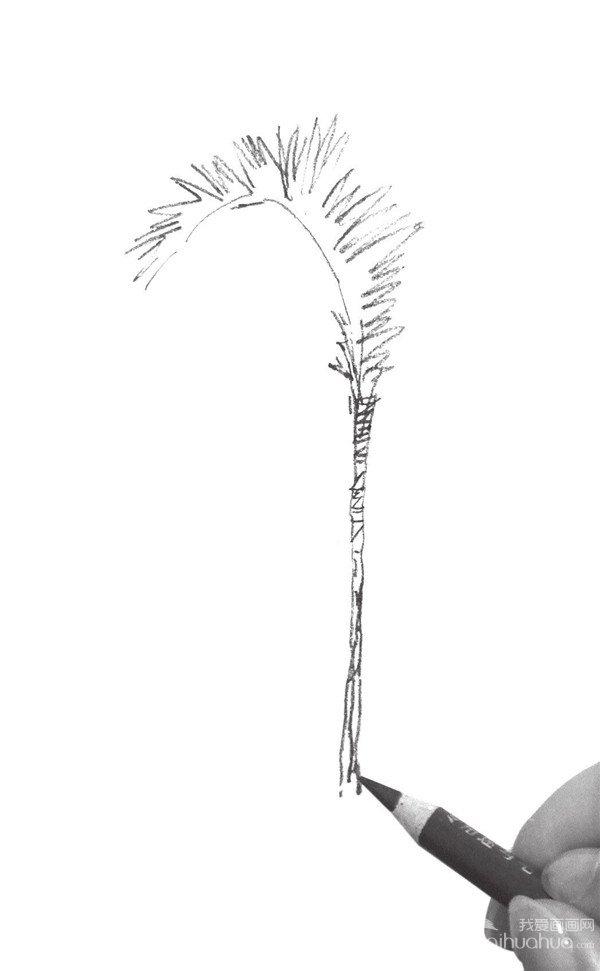 素描树丛的绘画步骤一
