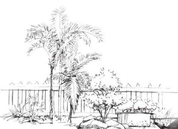 学画画 素描教程 素描风景 > 素描树丛的绘画画法(2)      4,添加画面