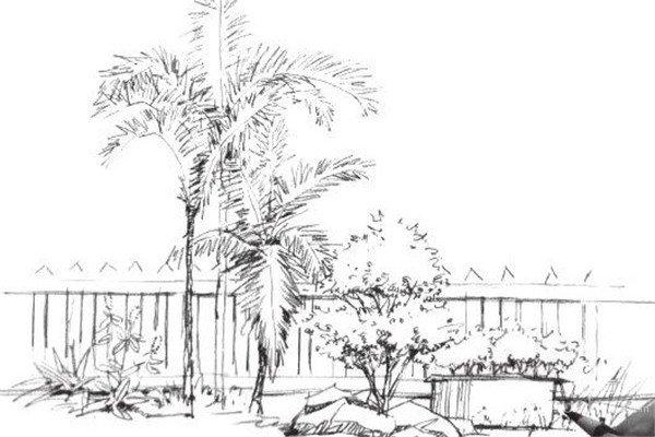 素描树丛的绘画画法