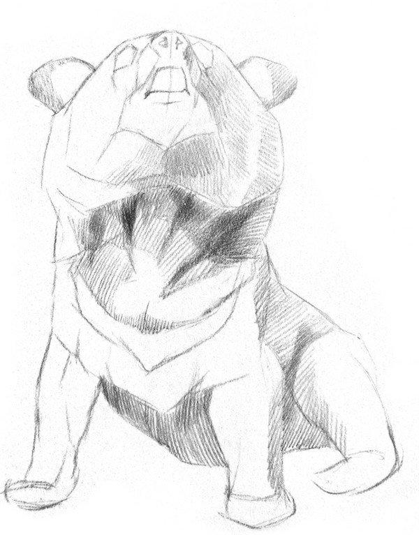 素描小灰熊的绘画步骤三