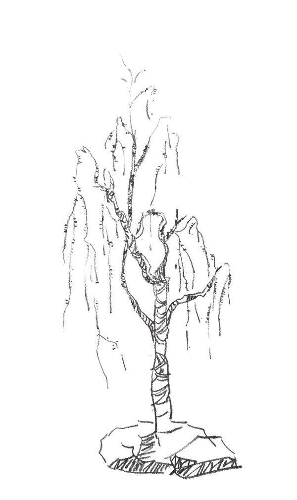 速写树丛的绘画步骤(3)