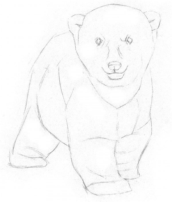 学画画 素描教程 素描动物 > 素描小北极熊的绘画教程(2)      1,画出