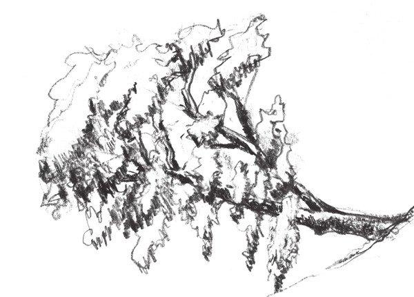 速写杉树的画法步骤