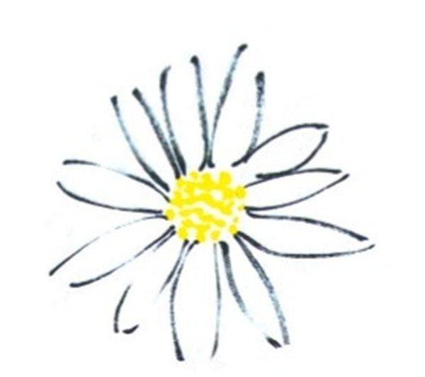 国画雏菊的完成图 1、用小笔调钛白、藤黄为浅黄色画花蕊。  国画雏菊花朵的绘画步骤教程一 2、小笔调三青,笔尖蘸花青,画花瓣。  国画雏菊花朵的绘画步骤教程二 3、勾边的菊花。小笔调重墨画花瓣,把握好花瓣的层次就好。  国画雏菊花朵的绘画步骤教程三 4、花瓣多的菊花,点花瓣的时候注意前后的颜色变化。  国画雏菊花朵的绘画步骤教程四 5、用深绿画叶子,一片叶子需五笔画出。  国画雏菊的绘画步骤五 上面的国画雏菊的绘画技法相信大家都看懂了,赶紧来尝试一下。